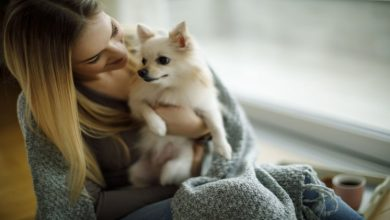 Photo of Importance Making relationship with Pets And How To do it