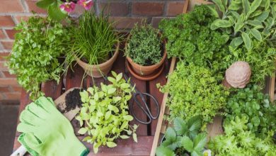 Photo of Must-Have Medicinal Plants To Keep You Healthy And Hearty